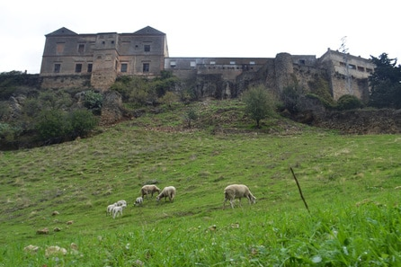 Photo of sheep in Ronda Spain, one of the most beautiful places in Andalucia Spain!