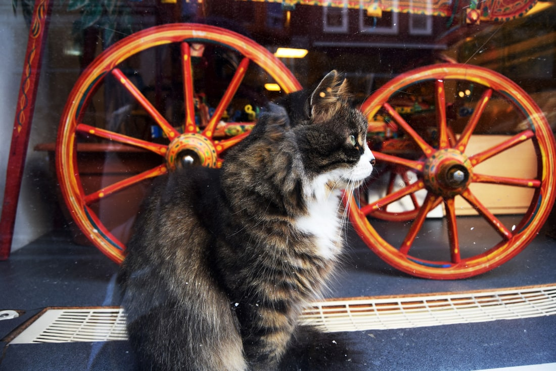 Cute cat in Amsterdam. Keep reading for insider tips for Amsterdam including don'ts in Amsterdam.