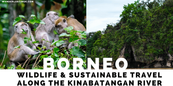 Read what to do in Borneo, the best place in Borneo to visit for wildlife, and what wildlife you'll see in Borneo!