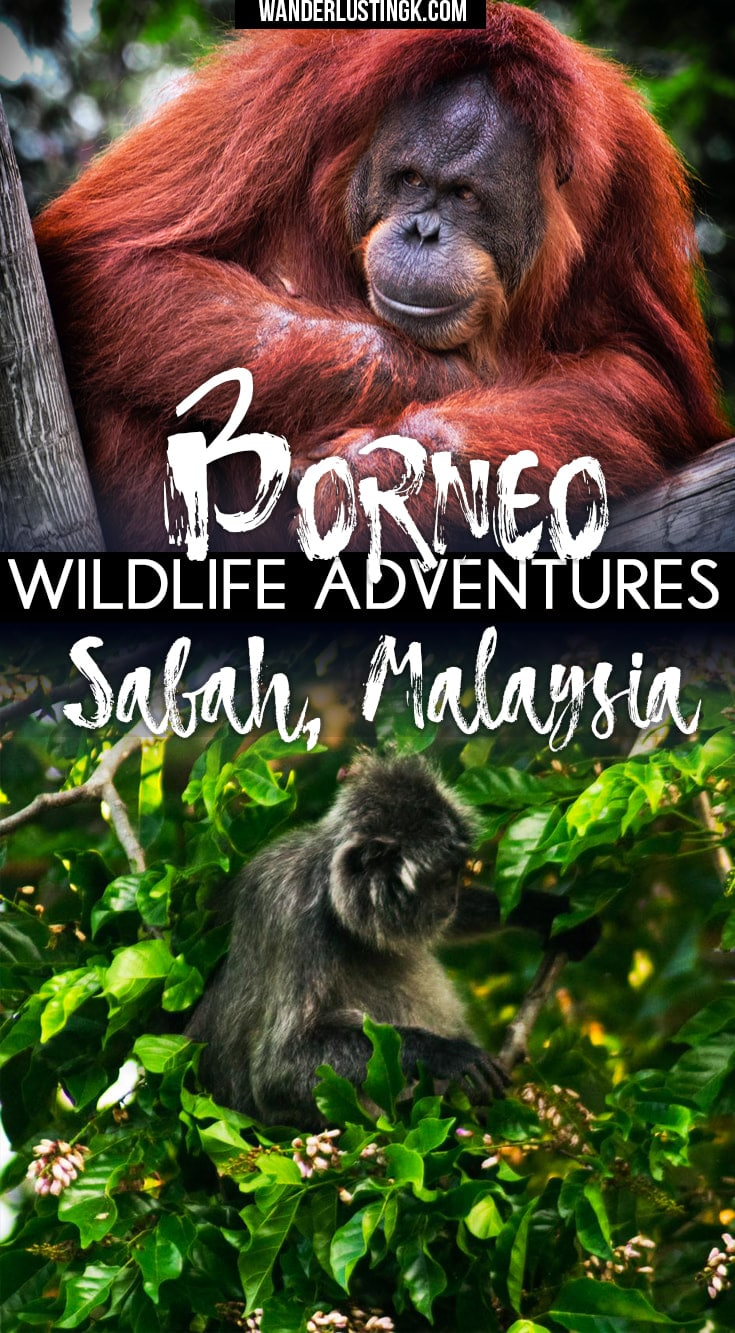 Read about the best things to do in Borneo, including wildlife adventures along the kinabatangan. Discover where to stay & the animals of Sabah, Malaysia