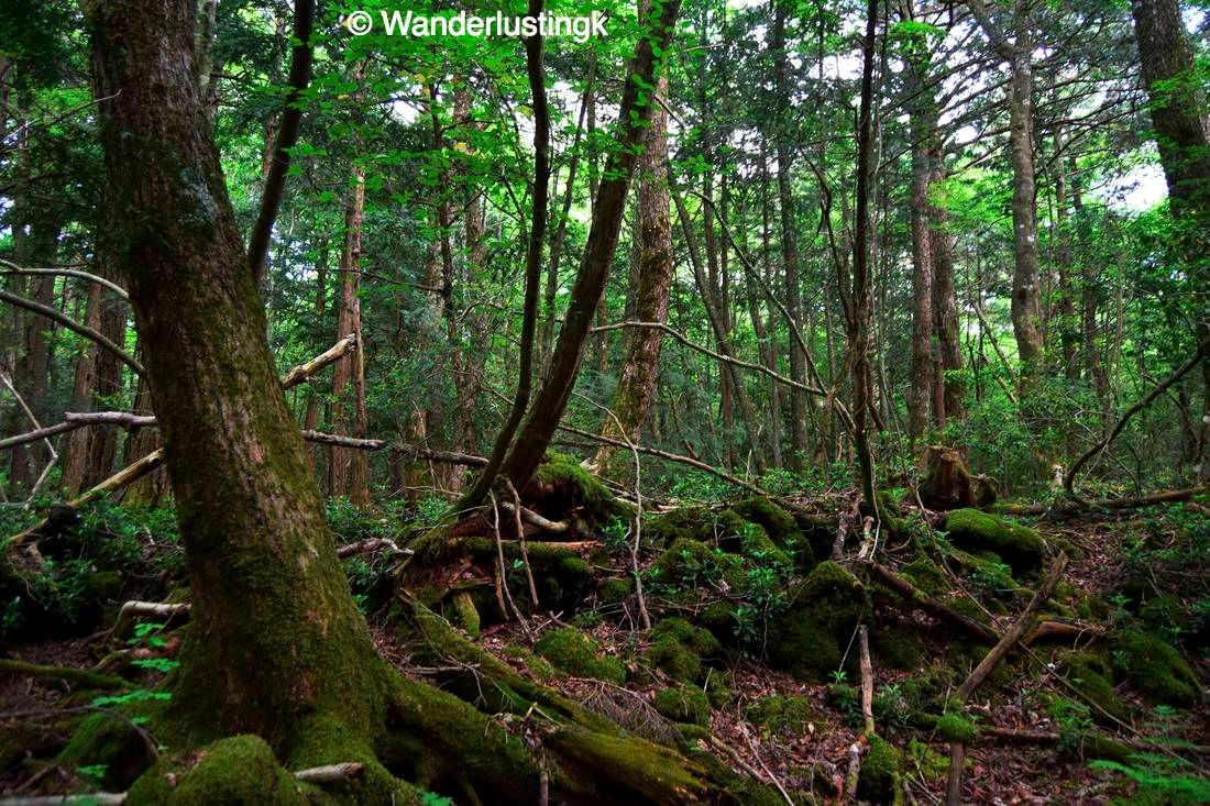 the truth about japan u0026 39 s suicide forest
