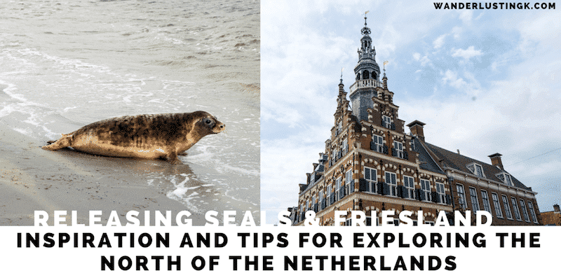 Things to do in Friesland on a weekend trip & ethical animal tourism to release rehabilitated seals back into the Wadden sea with Zeehondencentrum Pieterburen.