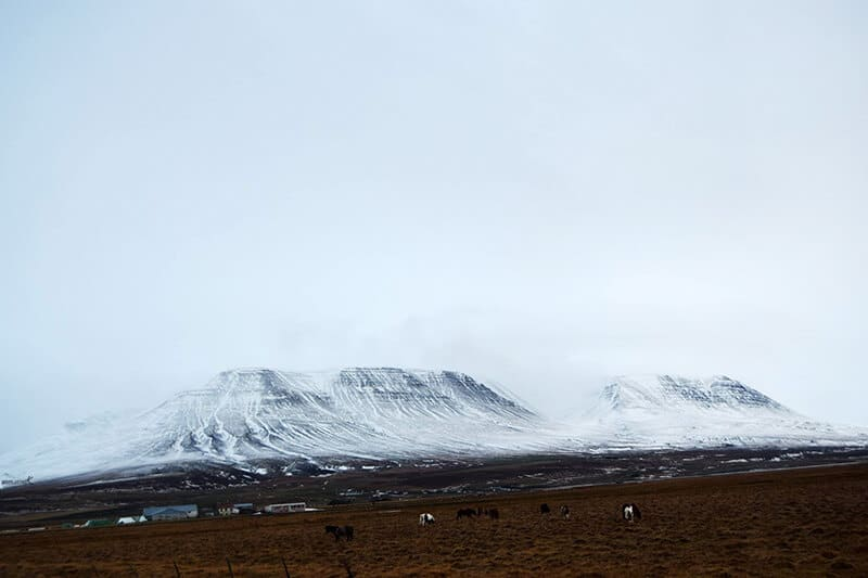 Horses in Iceland. Read tips for your Iceland winter road trip.