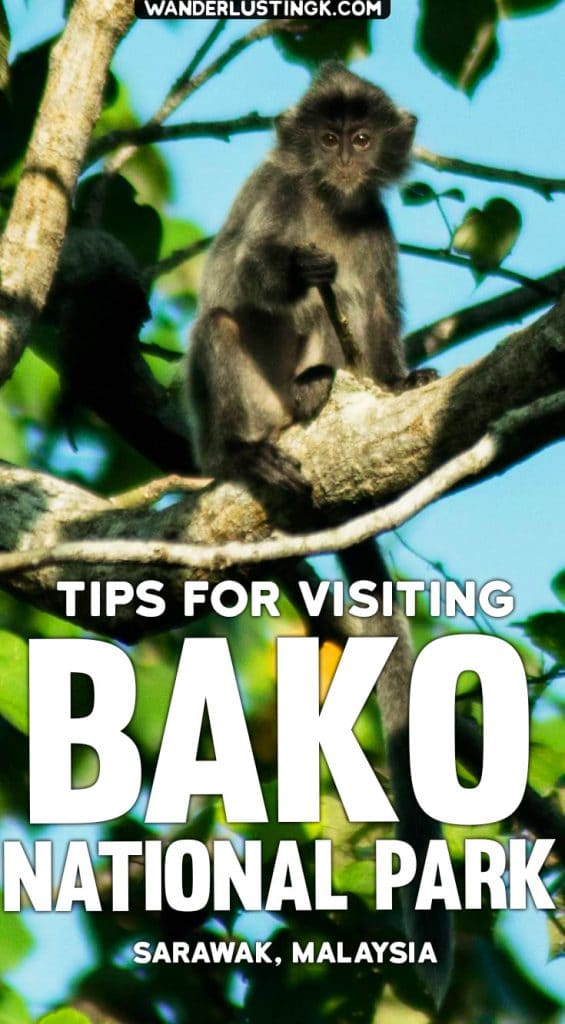 Tips for visiting Bako National Park in Borneo! Read what you need to bring to Bako National Park. #Malaysia #Travel #Bako #Borneo #Kuching