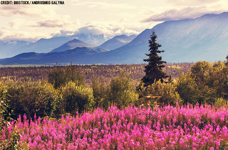 Photo of Denali National Park. Find out the best things to do in Denali National Park.
