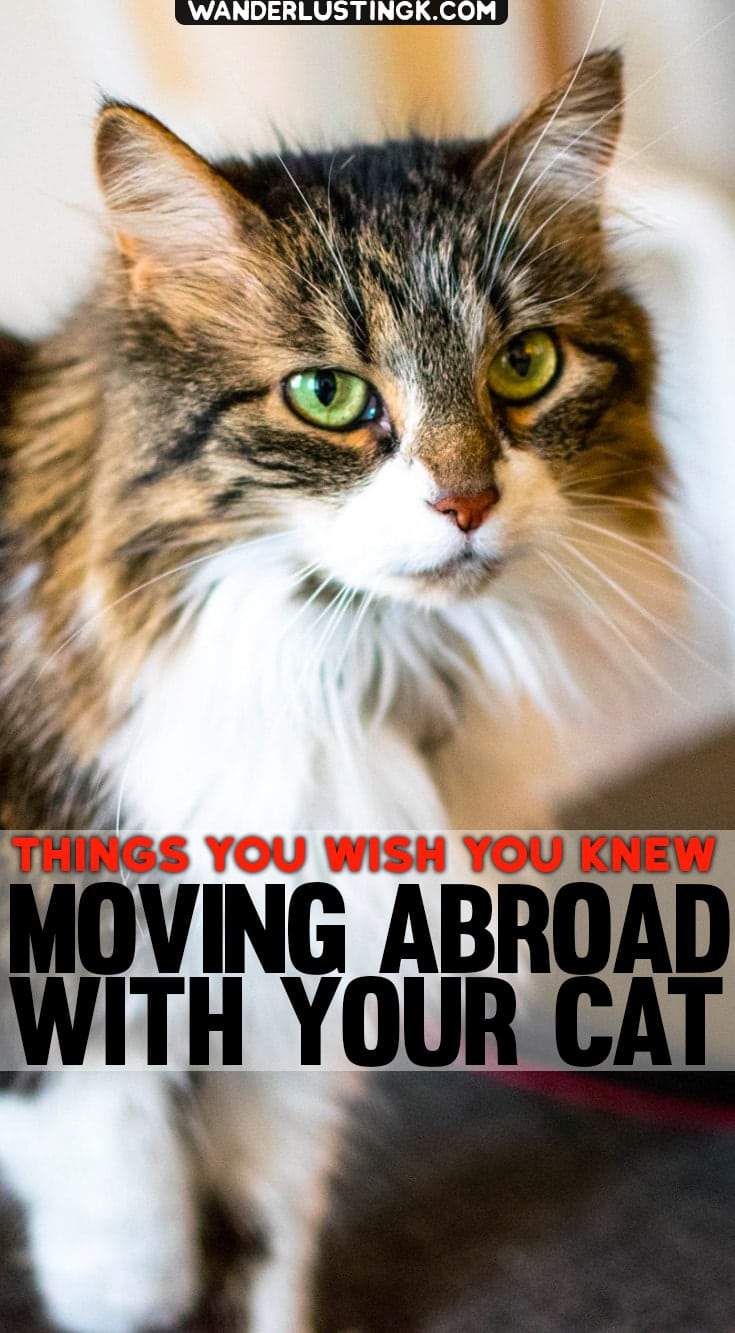 Planning to move abroad with a cat? Tips for traveling internationally with a cat & what to know before traveling abroad. #cats #travel #pettravel #expat