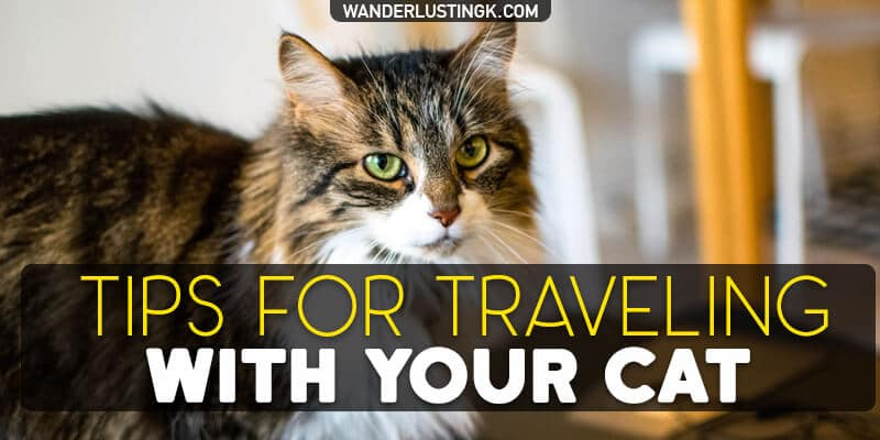 Planning to fly internationally with your cat? Tips for traveling with your cat overseas with things to keep in mind before moving abroad with your cat!