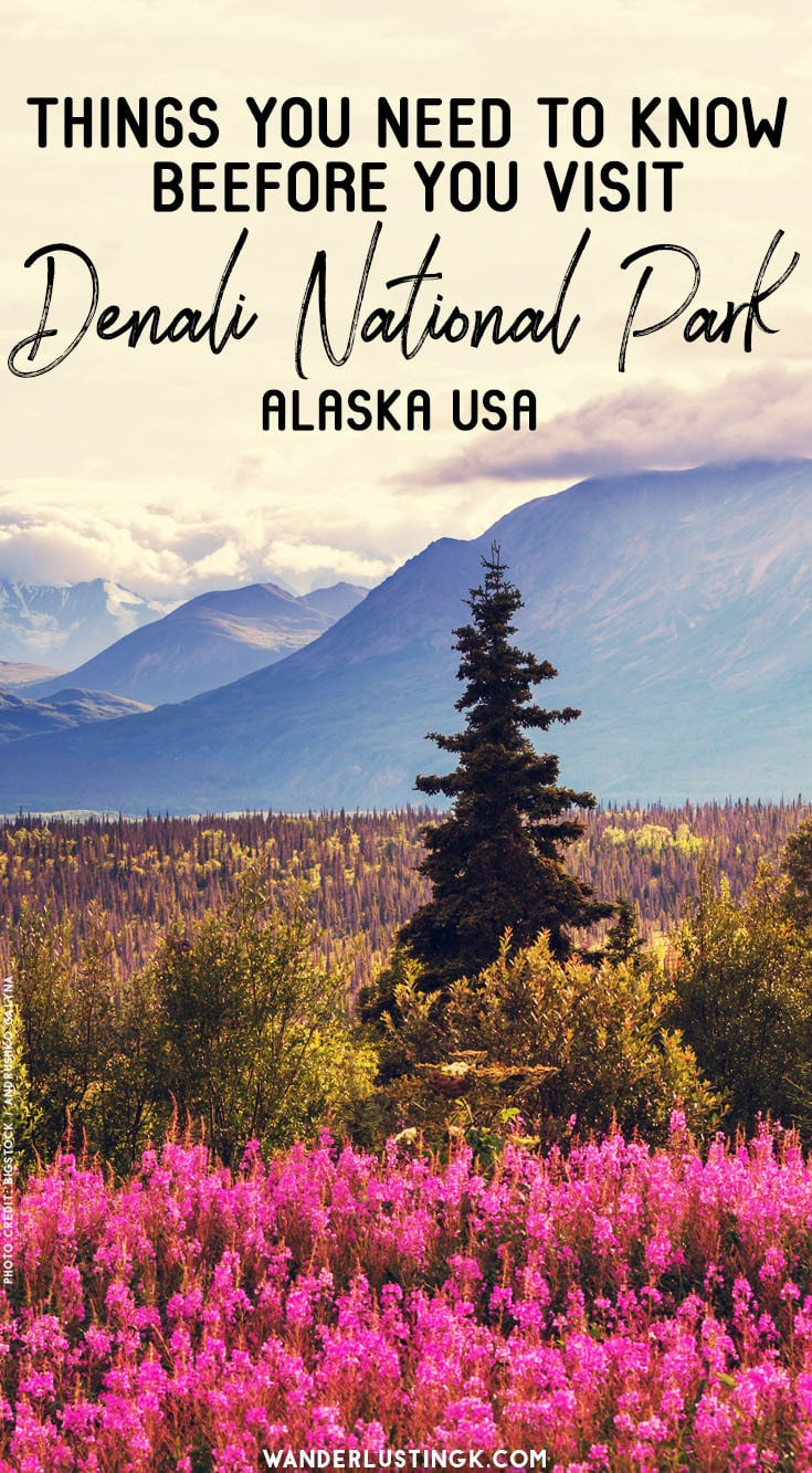 Tips For Visiting Denali National Park In Alaska