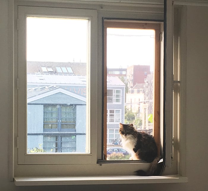 Photo of cat in window. Read tips for traveling with a cat overseas and moving overseas with your cat.