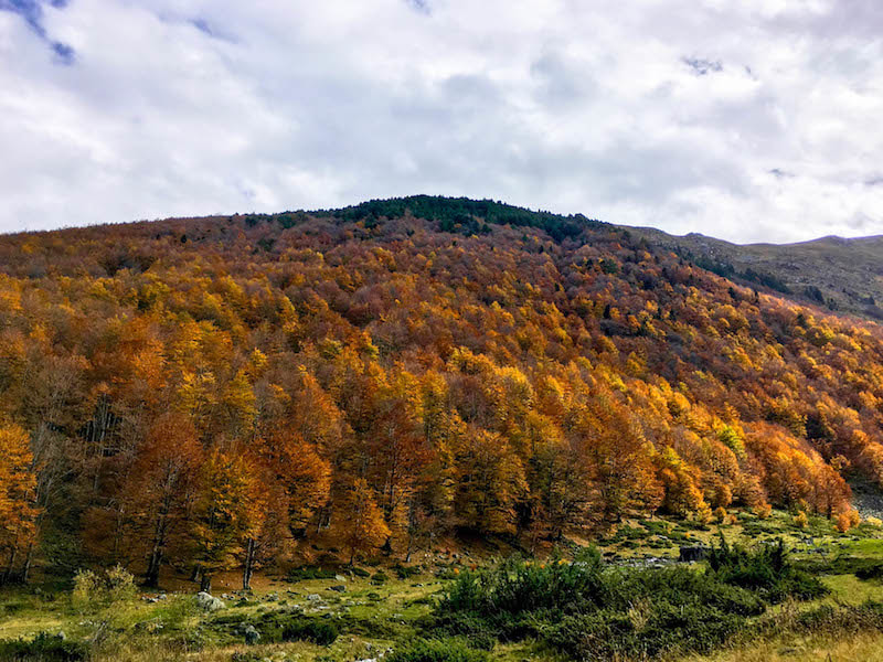 Beautiful fall foliage in Sharr Mountains in Kosovo. See why you should visit Kosovo through 40+ beautiful photos of Kosovo. Discover the Sar Mountains.