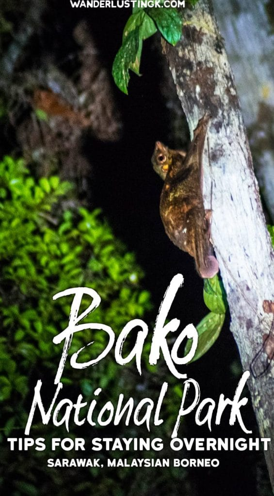 Why you should visit Bako National Park for more than a day trip from Kuching. Read travel tips for visiting Bako. #Malaysia #Travel #Bako #Borneo #Kuching