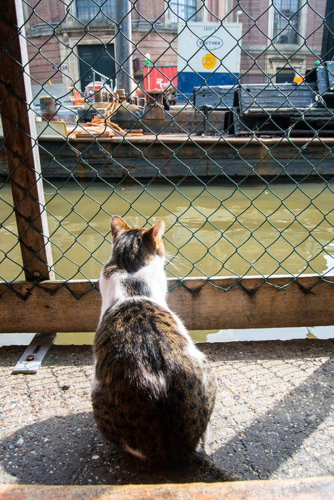 Cat on the De Poezenboot, the cat boat in Amsterdam. If you love cats, you need to visit this cat shelter on a boat! #Amsterdam #cats #travel