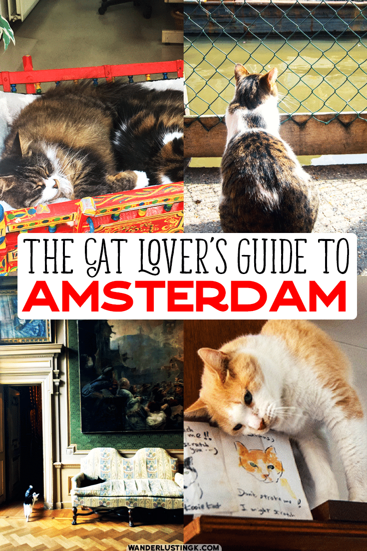 Your ultimate guide to cats in Amsterdam with the best places to find cats in Amsterdam , including cat cafes and a cat museum. #Amsterdam #Travel #Cats