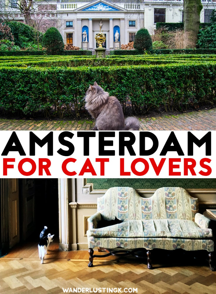Love #cats? Your cat themed guide to Amsterdam with the best cat cafes in Amsterdam, the cat boat, & a cat museum. #Travel #Amsterdam #Netherlands