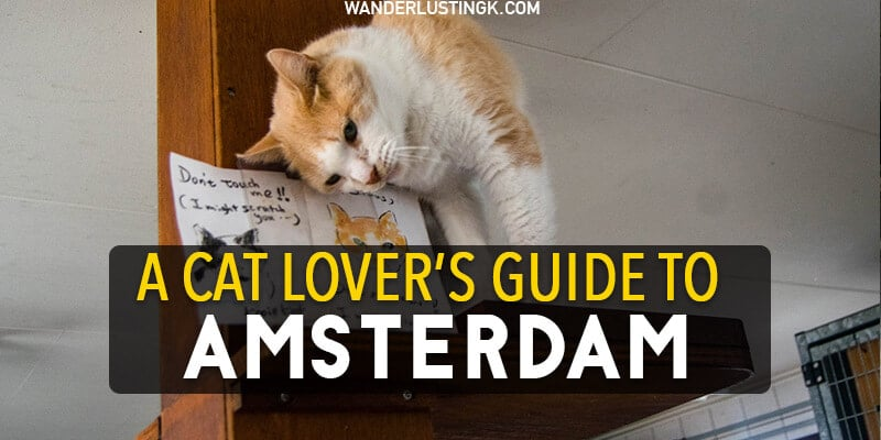 Catspotting: A crazy cat lover's guide to cats in Amsterdam