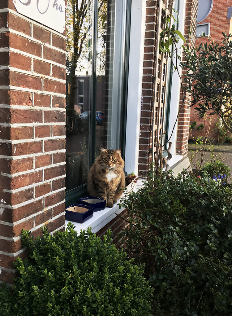 Fluffy cat in Amsterdam. Find out about the best places to visit for cat lovers in Amsterdam on a quirky trip to Amsterdam for those who love Catspotting.