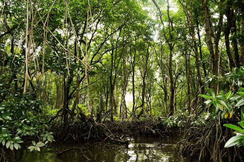 Mangrove Grove in Brunei as seen from a water taxi tour. See why you should visit BSB with advice on the best things to do!