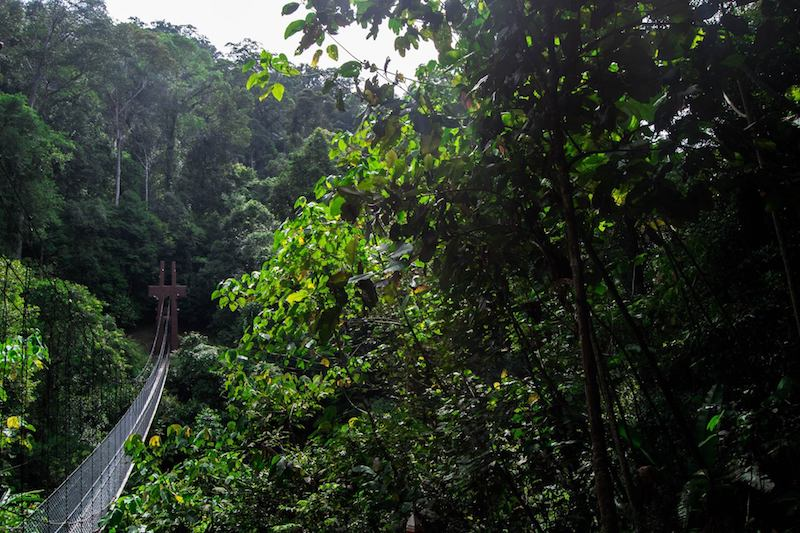 Photo of rope bridge in Ulu Temburong National Park in Brunei, the best day trip from BSB for adrenaline addicts!