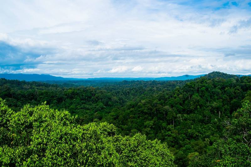 Photo of virgin rainforest in Ulu Temburong National Park in Brunei. View from the rainforest canopy walk.