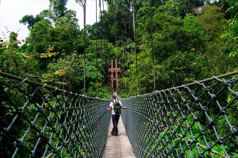 Photo of the rope bridge in Ulu Temburong National Park. Read tips for visiting Ulu temburong with advice for finding a good tour to Ulu Temburong National Park.