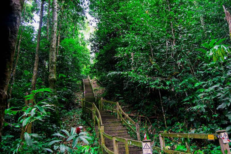 Photo of the many stairs in Ulu Temburong National Park in order to get to the 60 meter high canopy walk, one of the best things to do in Brunei.