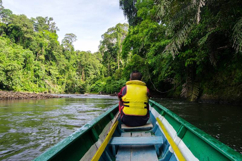 Photo of local guide guiding a traditional longboat upstream to Ulu Temburong National Park.