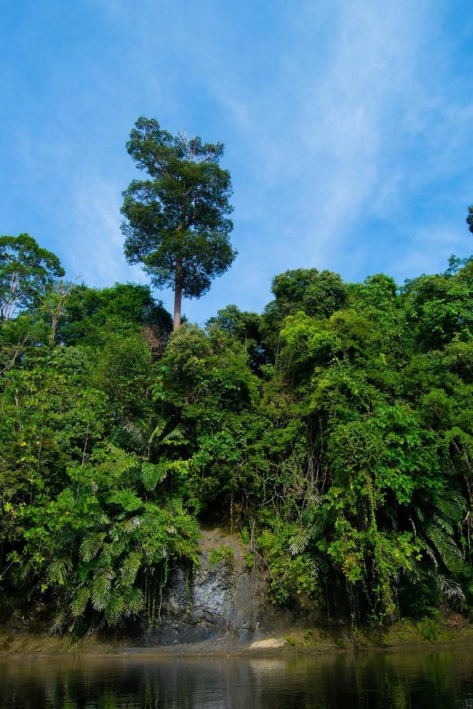 Photo of rainforest in Ulu Temburong National Park in Brunei. Read travel tips for Brunei and how many days to spend in Brunei. #Brunei #Travel #Asia
