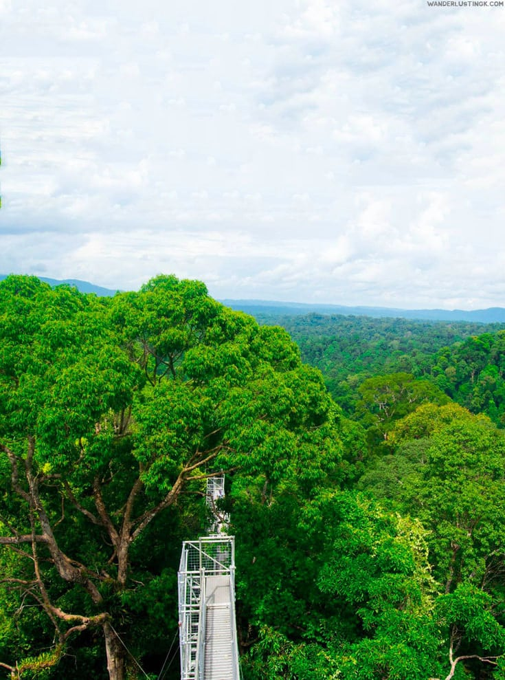 Looking for adventure tourism in Borneo? Your guide to Brunei's 60 meter rainforest canopy walk in Ulu Temburong National Park, the best thing to do in Brunei. #Travel #Brunei #Borneo #Adventure