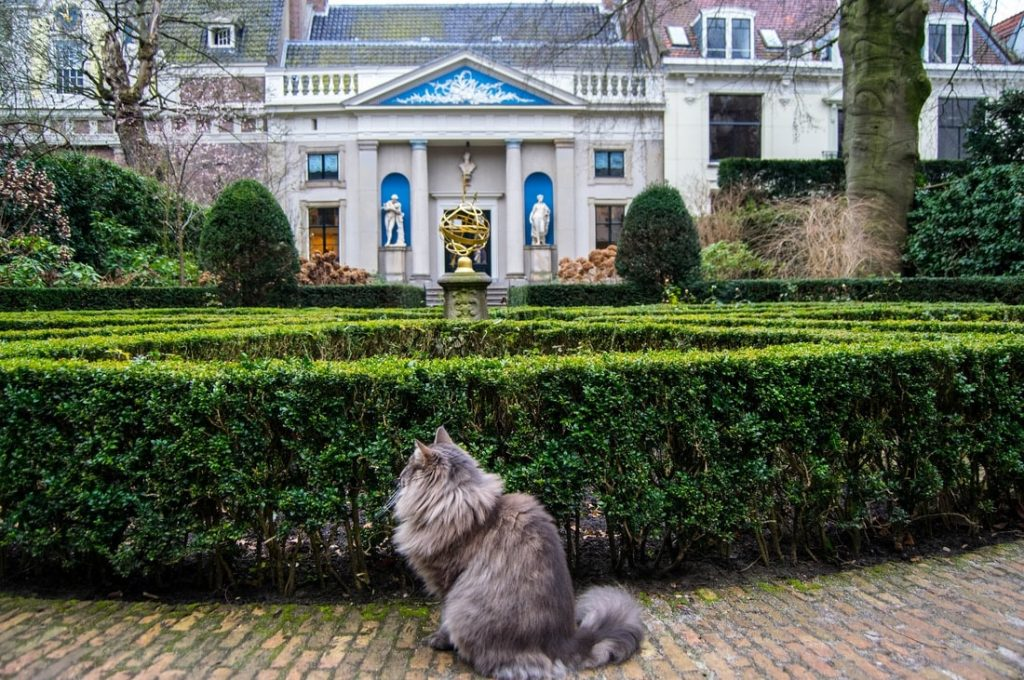 Photo of beautiful cat in Museum van Loon, one of Amsterdam's secret places to visit. Don't miss the secret garden behind the canal house. Want to get off the beaten path in Amsterdam? Read tips for secret spots in Amsterdam! #Amsterdam