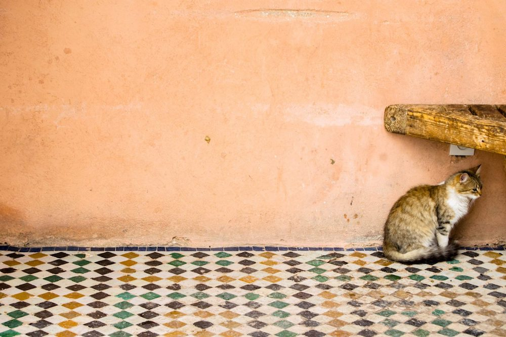 Cat in El Badi Palace in Marrakech Morocco. Read the best laid-back itinerary for enjoying Marrakech on a long weekend. #cats #travel #morroco