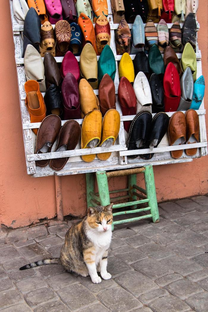 Photo of shop cat in Marrakech, Morocco. Read the best things to do in Marrakech with the perfect three day itinerary for Marrakech. #Marrakech #Morocco #travel
