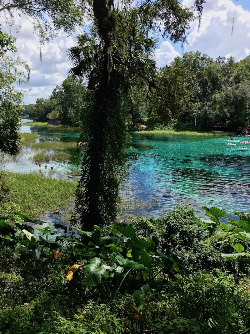 Photo of Rainbow Springs headwaters in Dunnellon Florida, one of the most beautiful day trips from Orlando, Florida! #USA #travel #Florida #Orlando