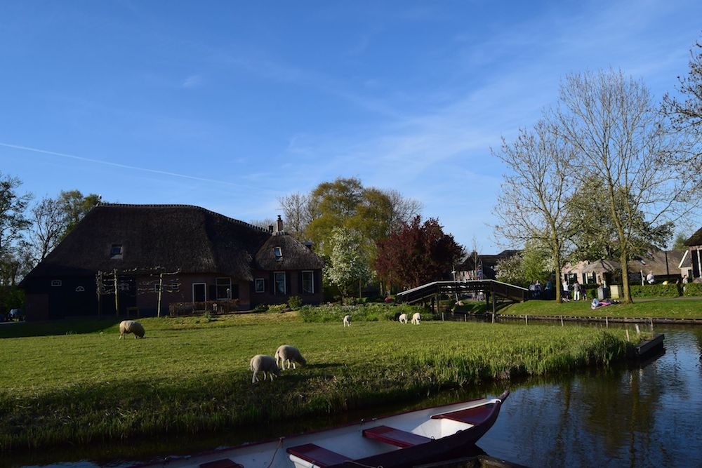 Canals and sheep in Giethoorn, The Netherlands. Interested in visiting the most beautiful village in the Netherlands? Tips for how to take a day trip from Amsterdam to Giethoorn. #giethoorn #travel #netherlands