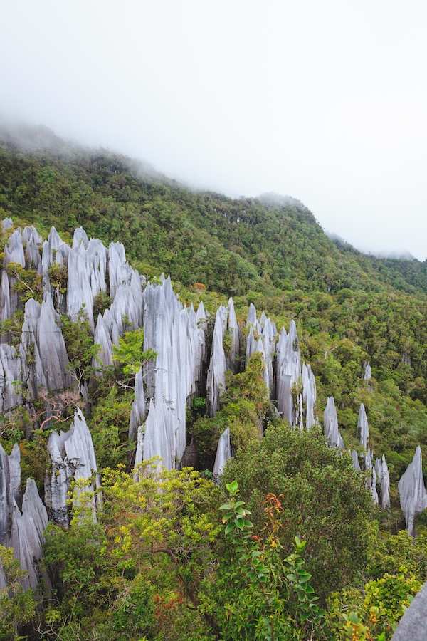 Limestone pinnacles at Gunung Mulu National Park, one of the best things to do in Borneo. If you're considering visiting Borneo, be sure to include Mulu in your Borneo itinerary! #Borneo #Malaysia #Ecotourism #Travel #Asia