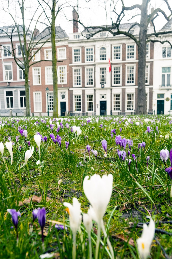 Lange Voorhout, one of the prettiest streets in the Hague. Read about what to do in the Hague in this local's guide to the Hague! #travel #denhaag #thehague #nederland #Netherlands #holland #spring