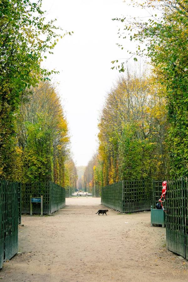 Cat roaming the gardens of Versailles, one of the best things to see in Versailles. Read essential Versailles travel tips on how to avoid the crowds at Versailles! #travel #france #versailles