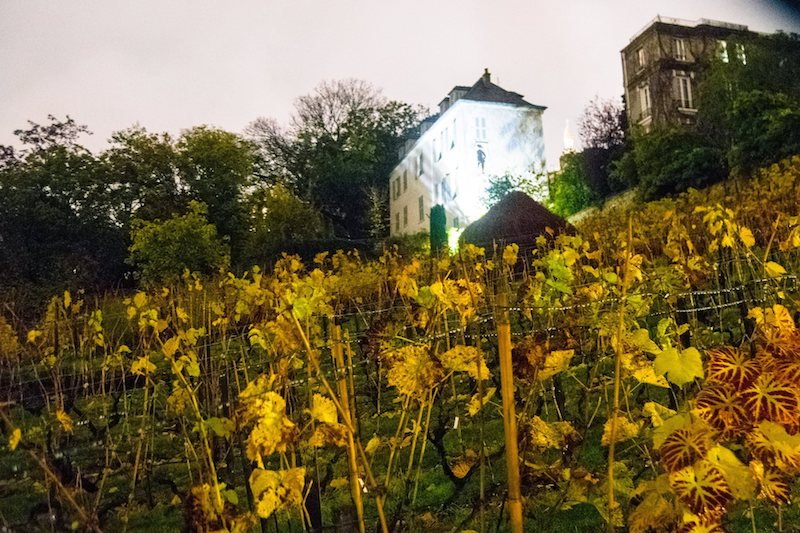 Clos Montmartre, vineyards in Montmartre. This off the beaten path attraction is something that you need to include on your self-guided walking tour of Montmartre! #vine #travel #Paris