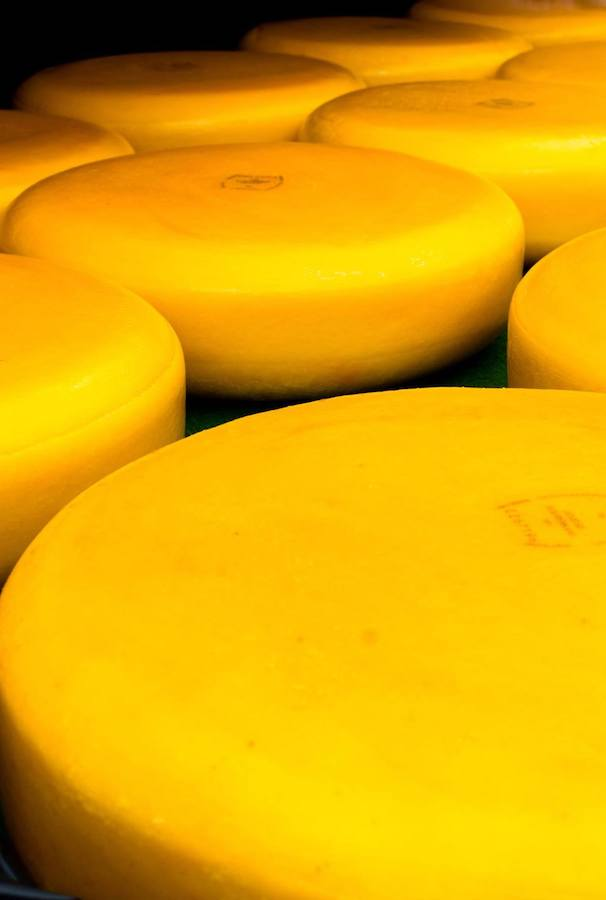 Dutch cheese (boerenkaas) at the Woerden Cheese Market (Woerden Kaasmarkt). Read about visiting the Woerden cheese market, one of the best Dutch cheese markets! #travel #dutch #cheese #netherlands #holland