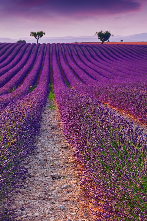 Lavender in Provence, France. Read your perfect Eurail itinerary for Europe with the best places to go during your Eurotrip! #travel #europe #France #Provence