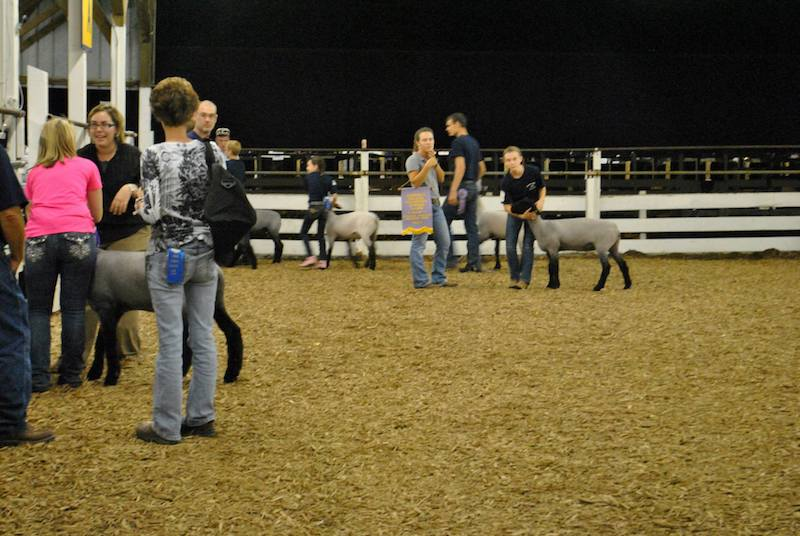 Animal judging contest at the Centre County Grange Fair.