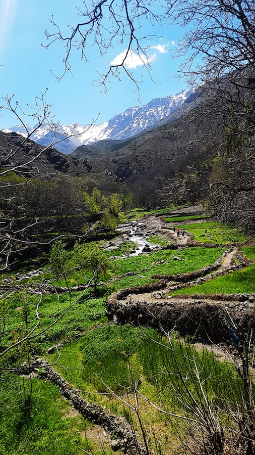 Lush green fields outside of Imlil, Morocco taken on a hike in Morocco in the High Atlas Mountains. #travel #morocco