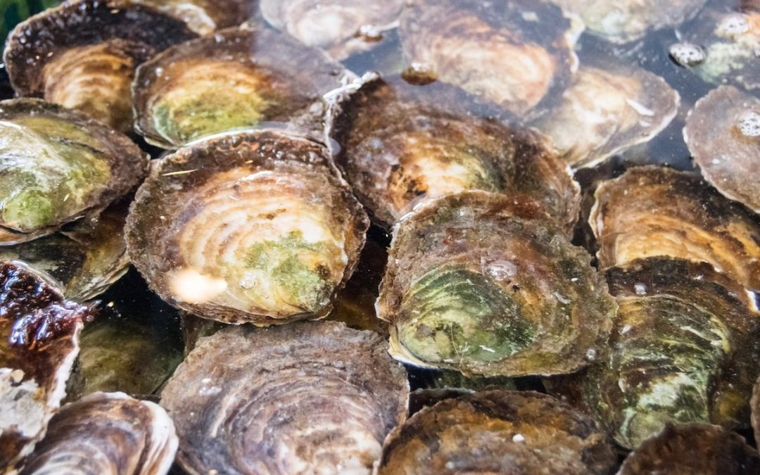 Your foodie guide to Yerseke, the best place to try Zeeland mussels, oysters, and lobster in Zeeland