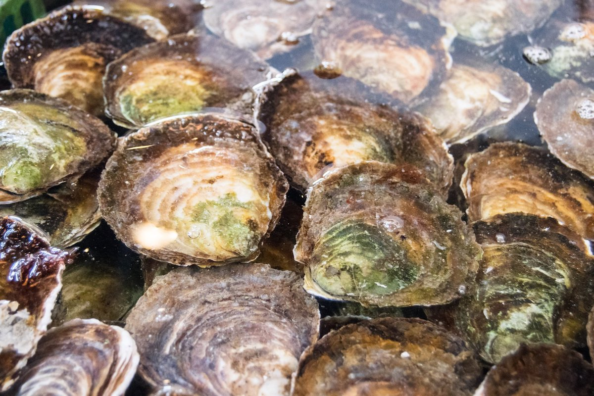 Zeeland oysters in Yereske. Read about Zeeland mussels and other food from Zeeland in this guide to the best seafood to try in Zeeland.