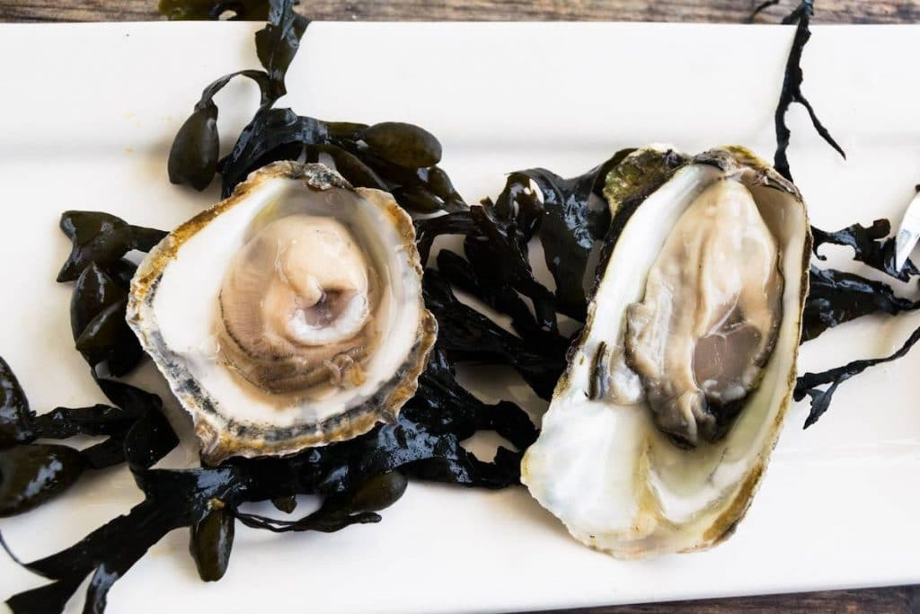 The Dutch Imperial oyster, one of the most rare Dutch oysters to try in the Netherlands. Read about the best Zeeland oysters to eat and where to eat them in Zeeland. #travel #zeeland