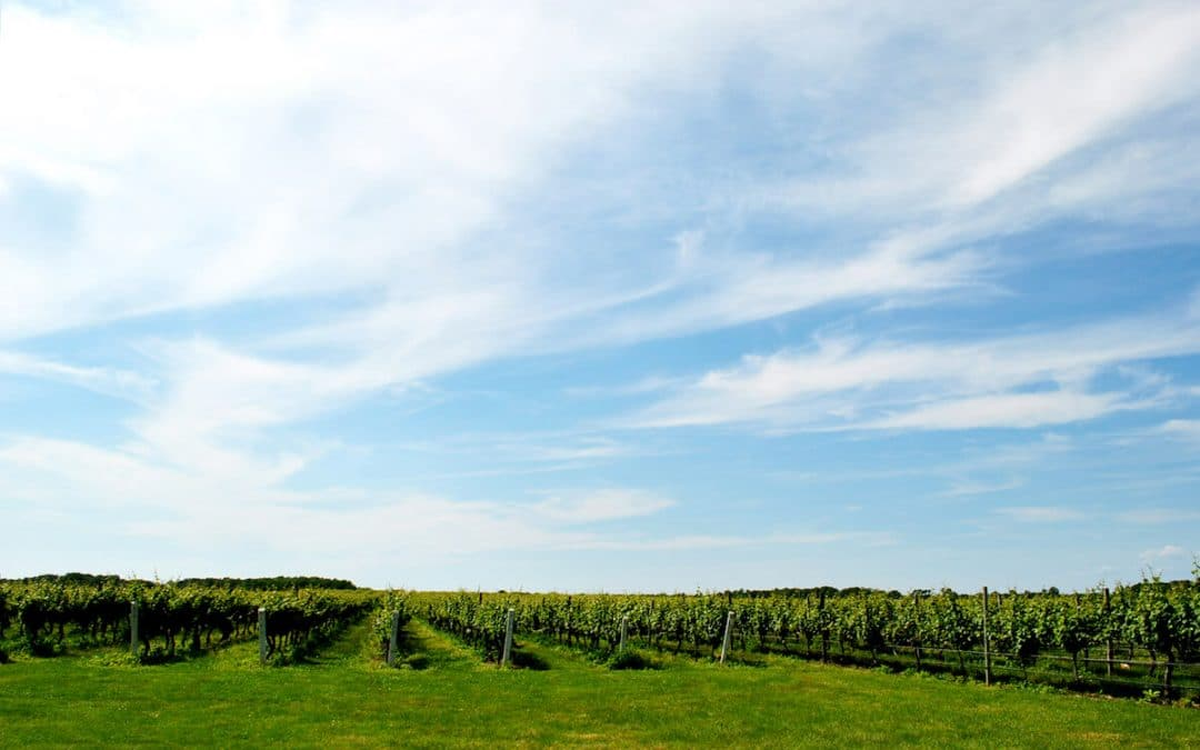 Your guide to the North Fork without a car with the best North Fork wineries