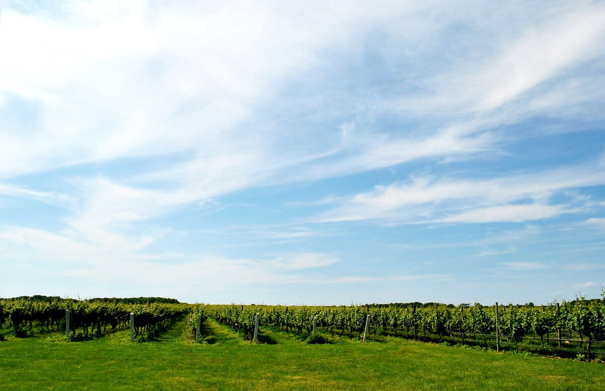 Scenic winery on the North Fork of Long Island. Read about the best wineries on the North Fork!