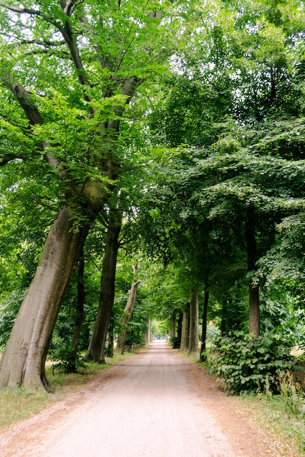 Leafy area of the former Land van Ooit, a beautiful park in Heusden