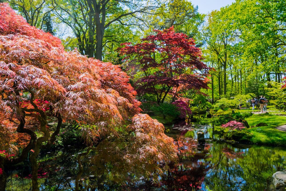 The Japanese Garden in the Hague. This beautiful garden in the Hague is only open a few weeks per year. #travel #denhaag #holland