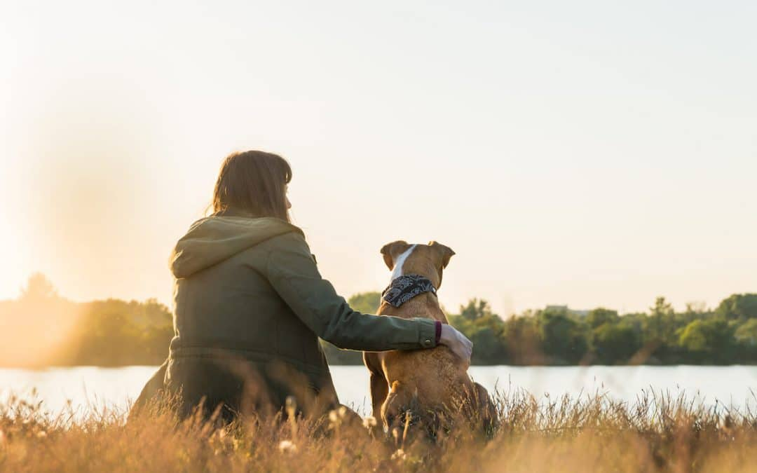 11 things to consider before traveling and moving abroad with your dog