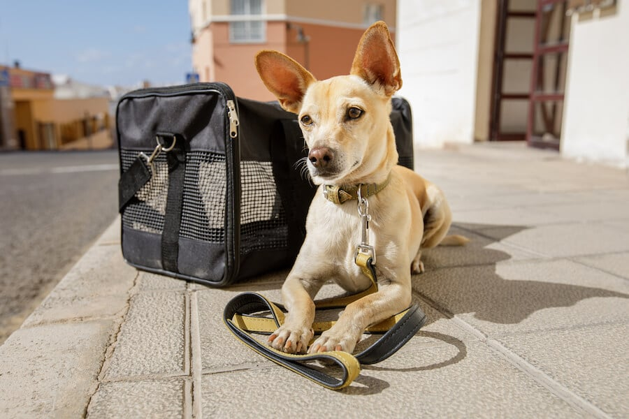 Dog with a crate. Read what you need to do prepare your dog for travel.